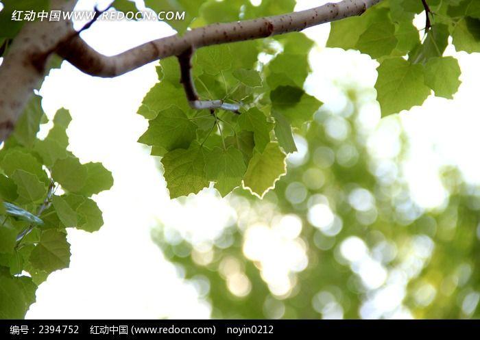 原创摄影图 动物植物 树木枝叶 光与树叶