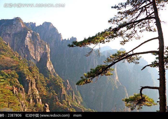 黄昏黄山松树图片_自然风景图片