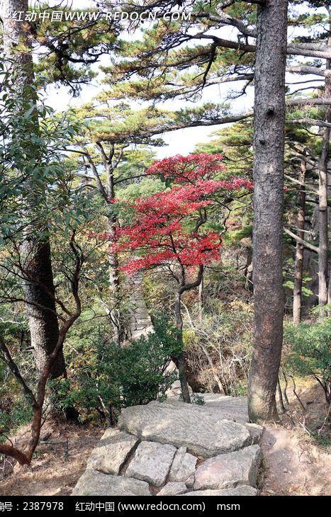 黄山树林间山路图片