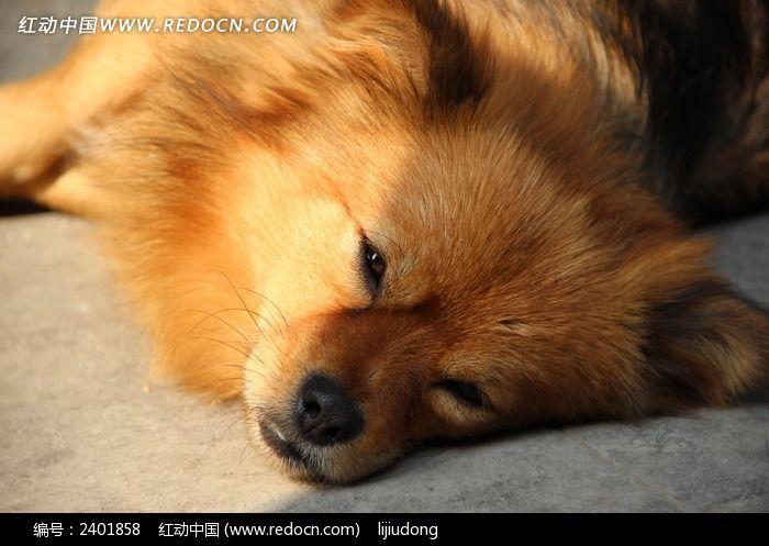 晒太阳的小狗