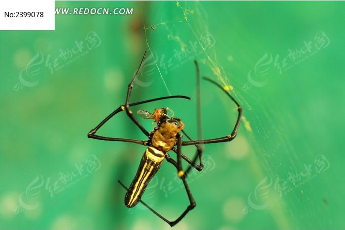 结网的蜘蛛高清图片下载_红动网图片
