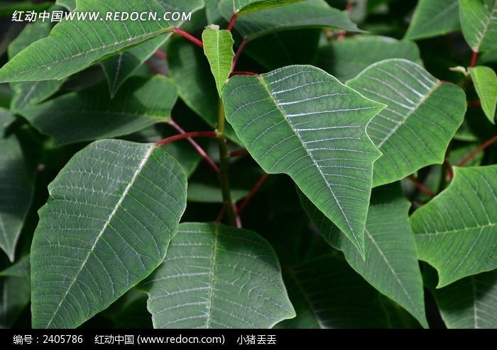 绿油油的叶子图片_动物植物图片