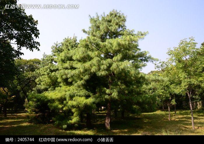 草地上翠绿的树木
