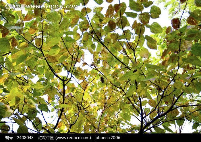 秋天午后阳光下五彩斑斓的树叶美景图片,高清大图