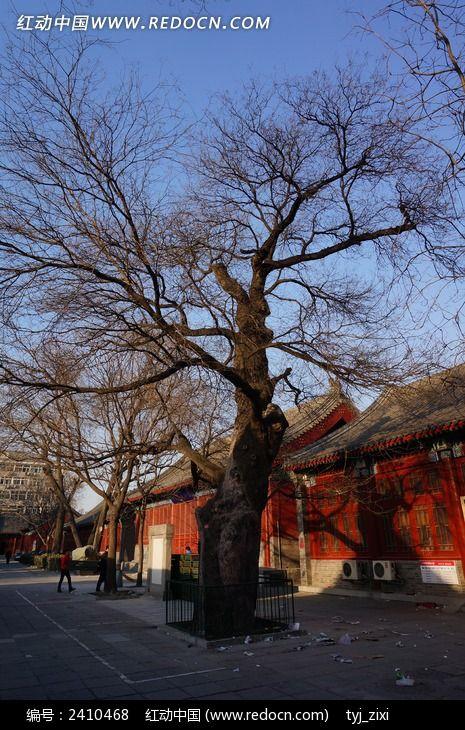 百年老树图片,高清大图