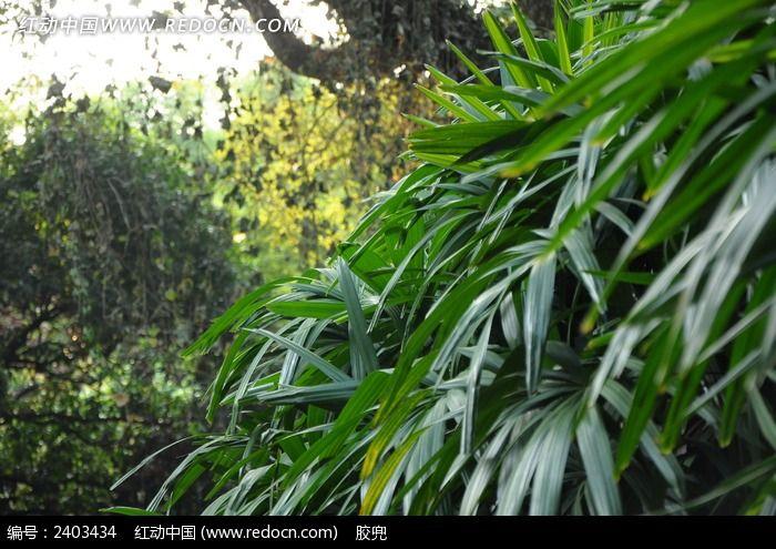 竹叶图片_动物植物图片