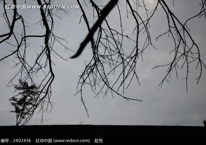 树枝剪影图片图片