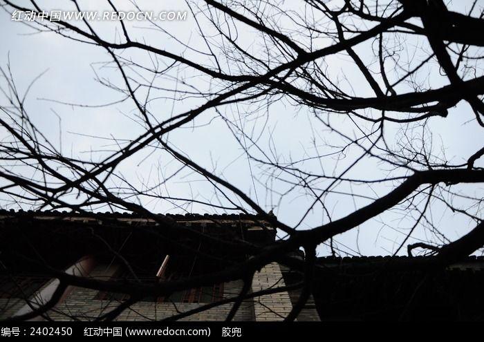 西安古城干树枝剪影图片图片