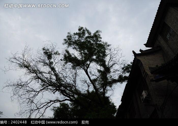 古城树枝剪影图片_建筑摄影图片图片