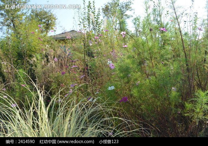 原创摄影图 动物植物 花卉花草 秋天的绿色植物  请您分享: 素材描述
