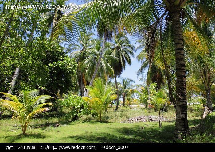 海岛绿化图片,高清大图_森林树林素材