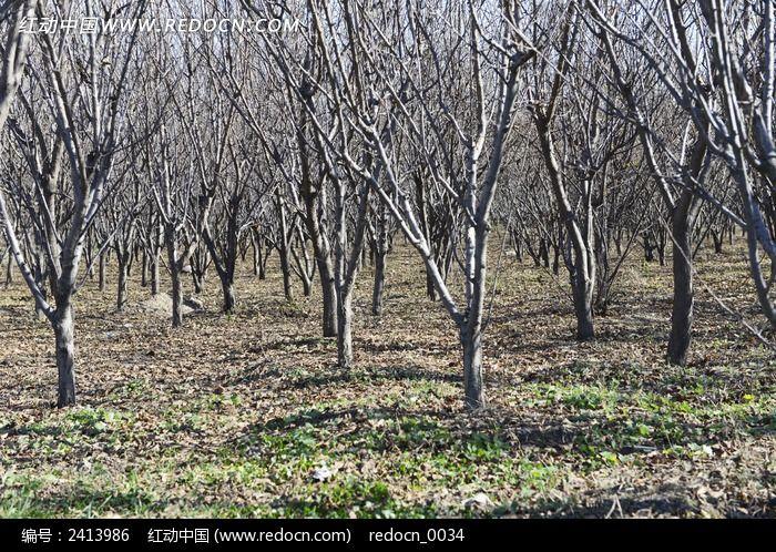 树枝树干景观图片