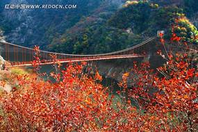 秋天红叶山水