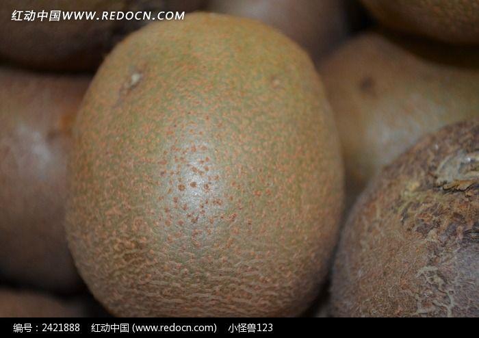 猴子桃树图-红动网提供水果蔬菜精美高清图片下载,您当前访问图片主题是泥猴桃