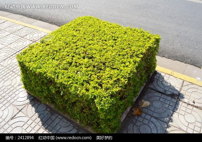 方形植物图片_自然风景图片