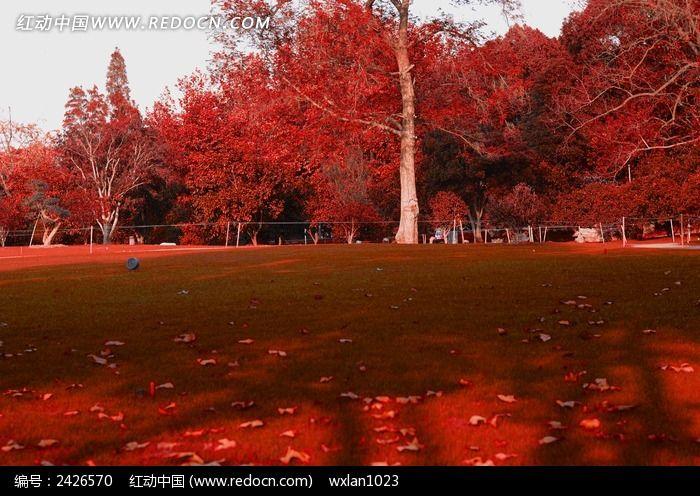 红树林和草地图片