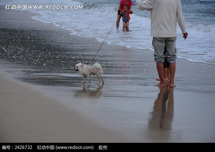海边遛狗的人图片,高清大图_海洋沙滩素材图片