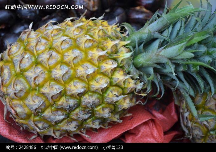 菠萝近景图片,高清大图_水果蔬菜素材