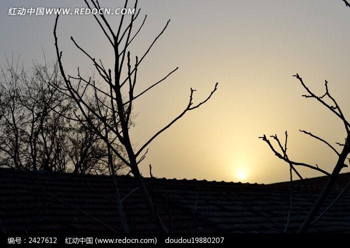 屋顶核桃树剪影图片_动物植物图片