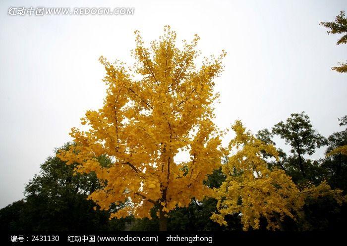 原创摄影图 自然风景 森林树林 秋季红黄叶树林