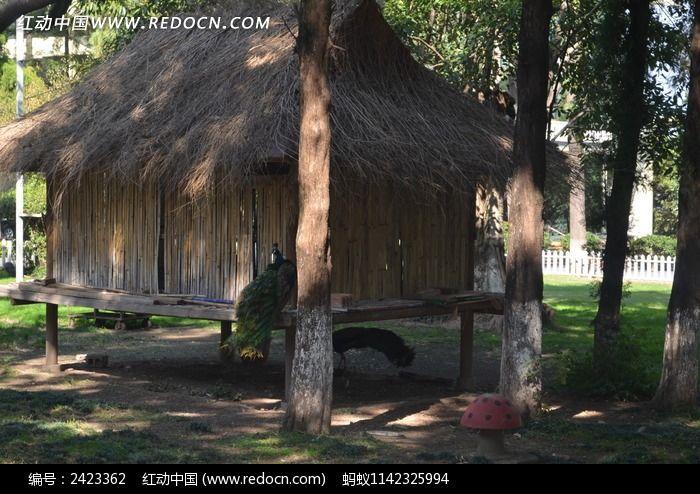 孔雀的房子图片,高清大图_空中动物素材