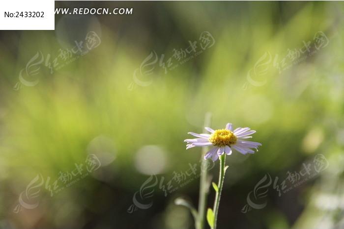 原创摄影图 动物植物 花卉花草 清晨白色小花