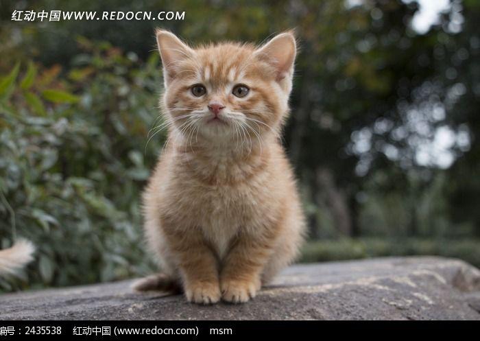 壁纸 动物 猫 猫咪 小猫 桌面 700_497