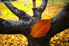 枝头的的红叶