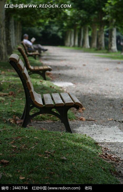梧桐树下的座椅图片_人物摄影图片