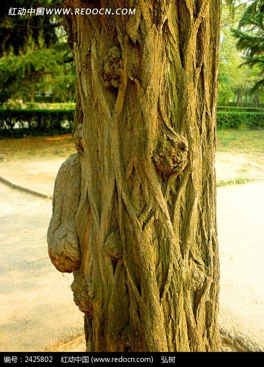 奇特纹理的树身图片,高清大图_树木枝叶素材
