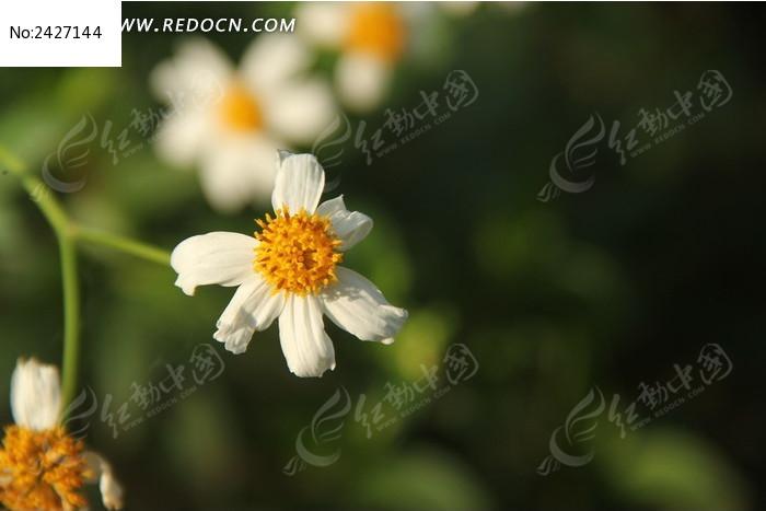 菊花花朵特写图片_动物植物图片