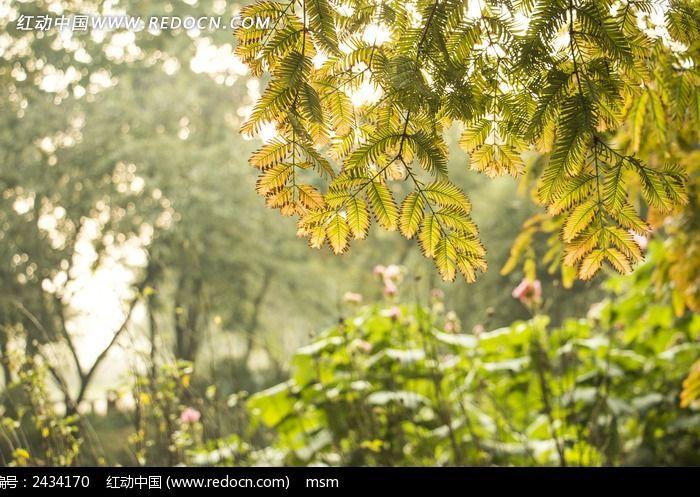 原创摄影图 动物植物 树木枝叶 秋天树叶  请您分享: 红动网提供树木