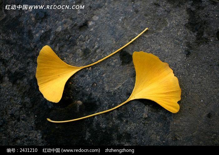 银杏树叶裙简笔画展示图片