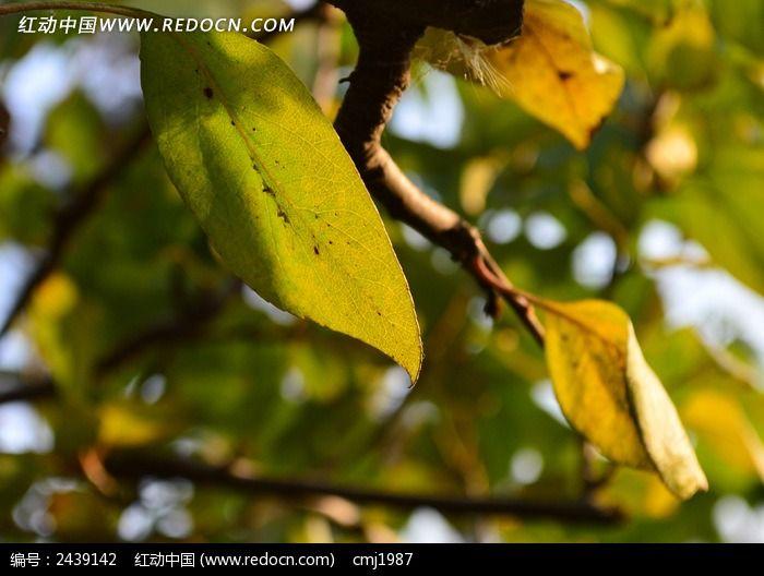 黄绿色树叶图片_动物植物图片
