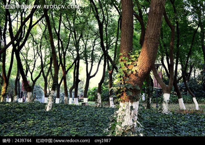 树林里的树木图片,高清大图_树木枝叶素材