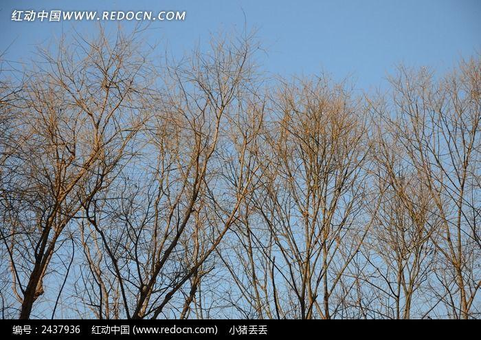 枯萎的树林图片_动物植物图片