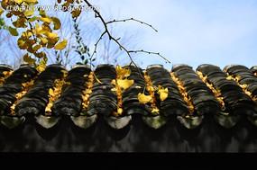 落满黄叶的古典屋顶