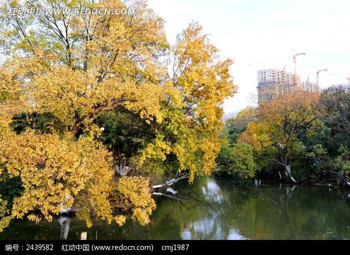 红梅公园的美丽树木河面图片