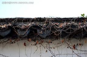 东坡公园古老的屋檐