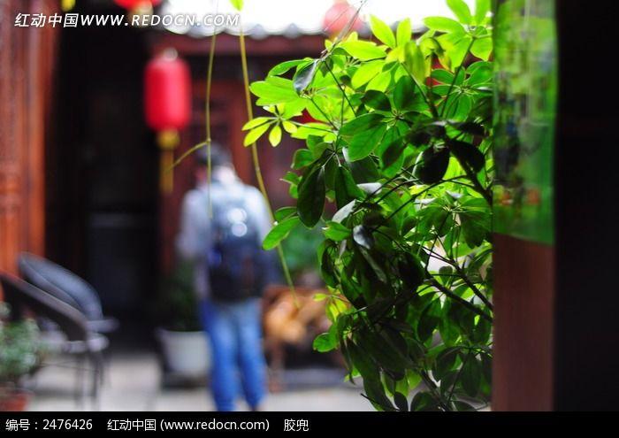 原创摄影图 动物植物 花卉花草 客栈院子里葱翠的植物