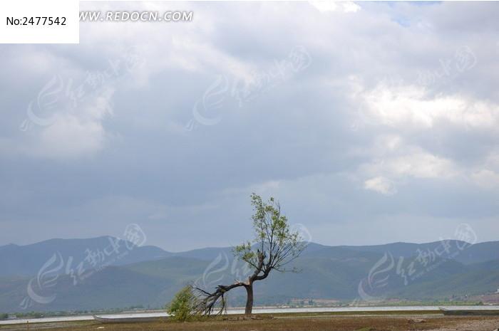 原创摄影图 自然风景 田野田园 孤独的树