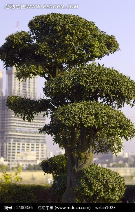 园林景观植物