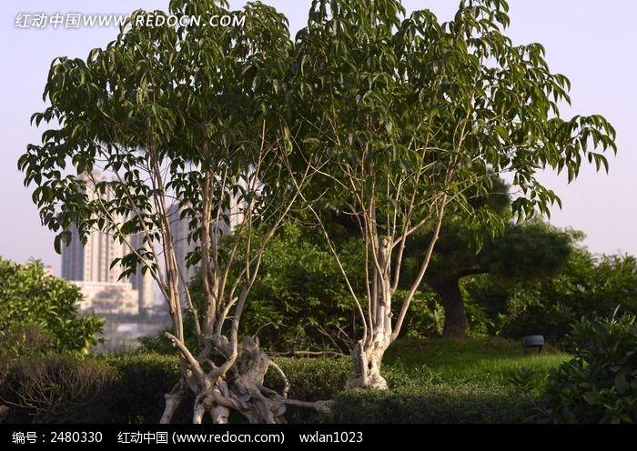 原创摄影图 动物植物 花卉花草 公园里的树木  请您分享: 红动网提供