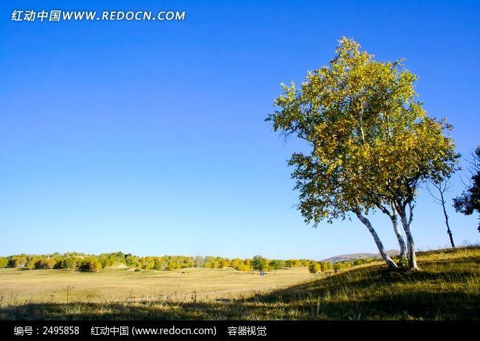 草原中的胡杨树图片,高清大图_草原风光素材