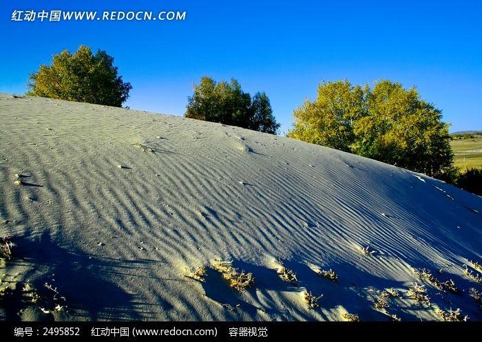 沙漠胡杨林高清图片下载 红动网