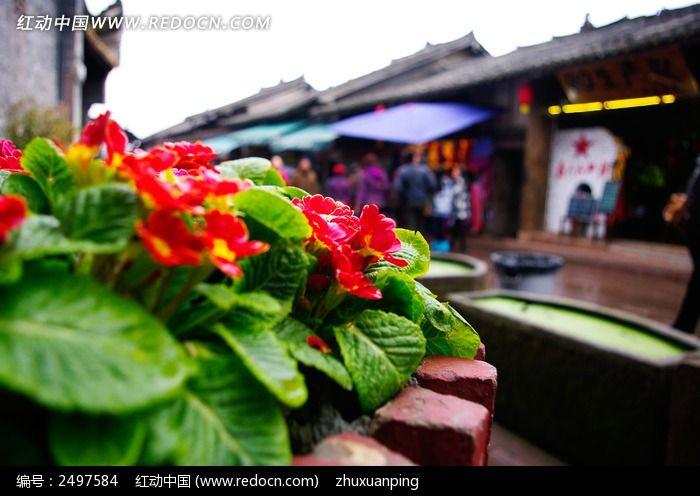 街道旁的鲜花图片_动物植物图片