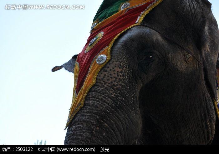 大象眼睛特写图片