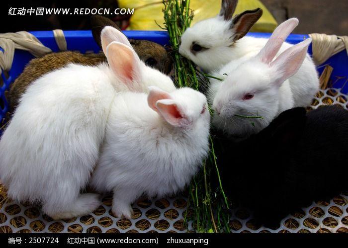 六只兔子图片,高清大图_陆地动物素材