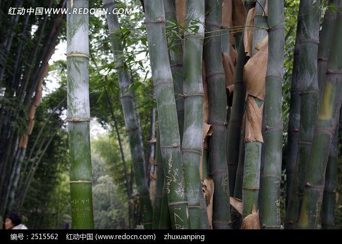 翠竹图片_动物植物图片