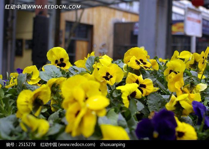 鲜花怒放图片_动物植物图片